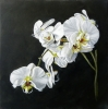 White Orchids I